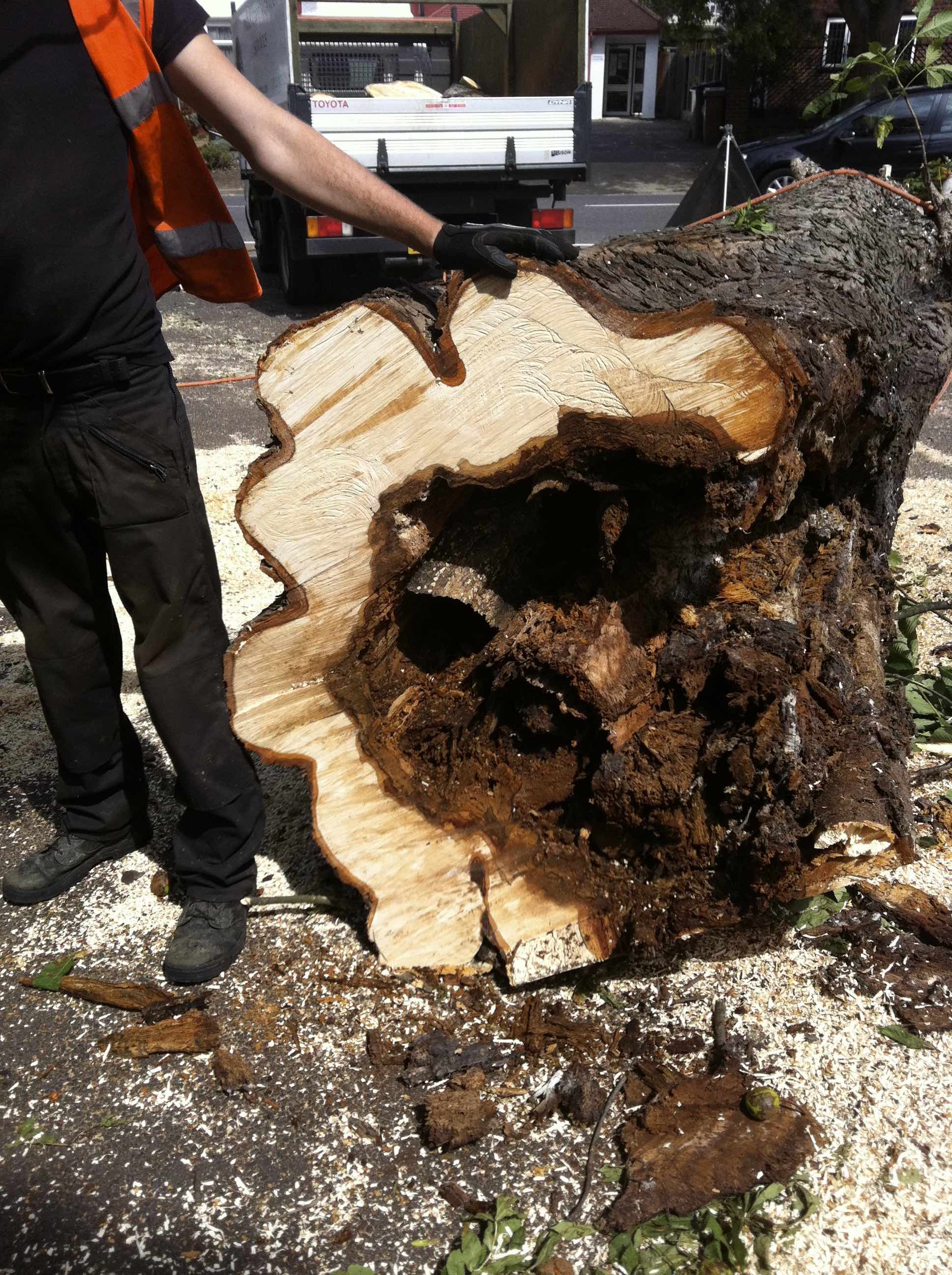 Logs paul 39 s trees of waltham abbey for Local pond supplies